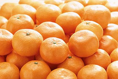 国産柑橘のイメージ